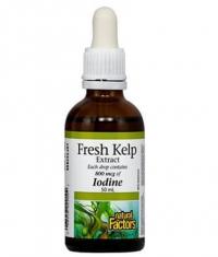 NATURAL FACTORS Fresh Kelp / 50ml